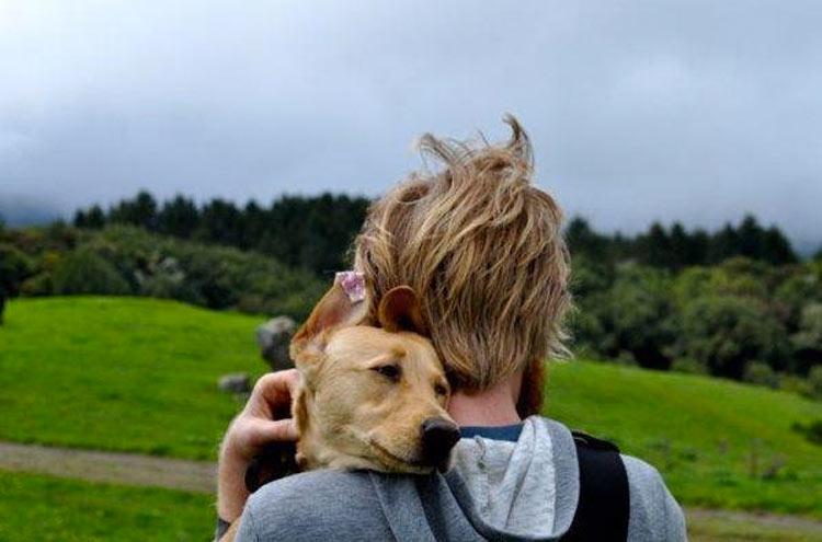 perros-llevados-duenos-31