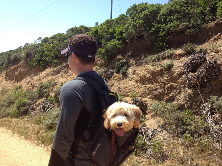 perros-llevados-duenos-7
