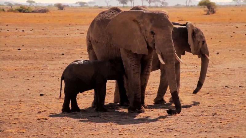Este Reencuentro De Una Madre Elefante Y Su Cría Te Hará Llorar