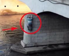 Este Hombre Saltó De Un Puente, Pero Cuando Veas Lo Que Hace A Continuación Sonreirás Todo El Día