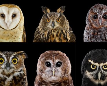 Impresionantes Retratos de Buhos Capturados Con Un Detalle Extremo 2