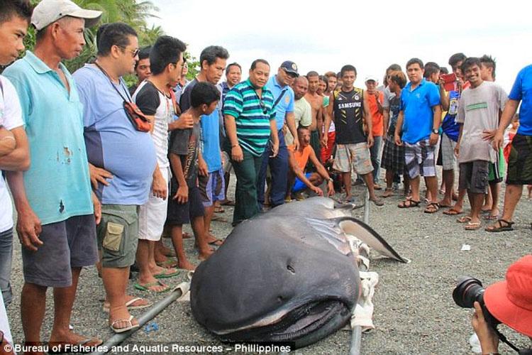 """Monstruo """"Desdentado"""" De Las Profundidades Capturado Por Pescadores En Filipinas"""