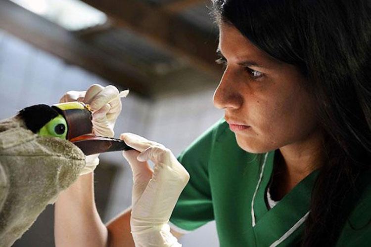 El Tucán Maltratado Por Adolescentes Consigue Un Nuevo Pico Gracias A La Impresion 3D