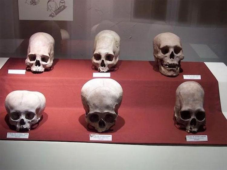 Un Análisis de ADN Indica Que Estos Antiguos Craneos Peruanos Podrían No Ser Humanos