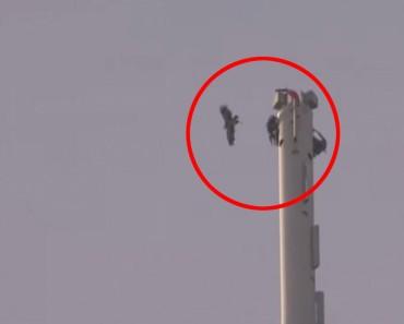 Un aguila se lanza desde el edificio más alto del mundo y esto es lo que ve