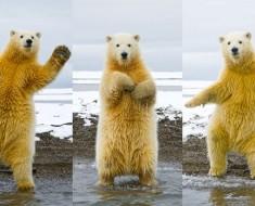 animales-bailando-16