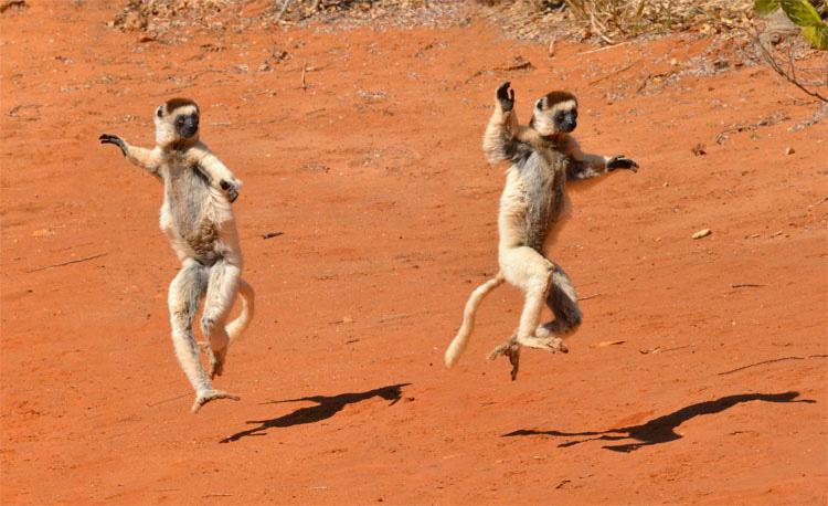 27 animales que son terriblemente buenos bailando. AL #14 No le importa lo que la gente piensa