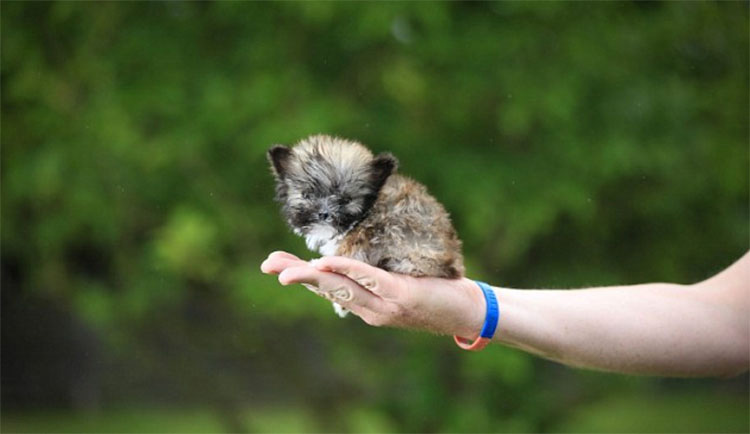 Los animales más pequeños del mundo le darán una razón ...