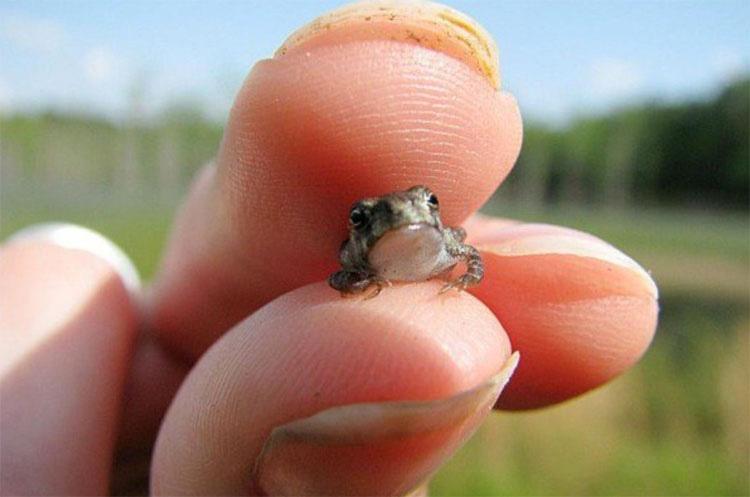 Los animales más pequeños del mundo le darán una razón para sonreír