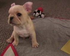 ¿Qué puede aprender un cachorro en sólo 4 días? Este perrito derretirá su corazón