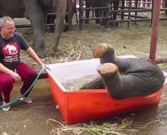 El baño de este pequeño y torpe elefante te llenará de FELICIDAD