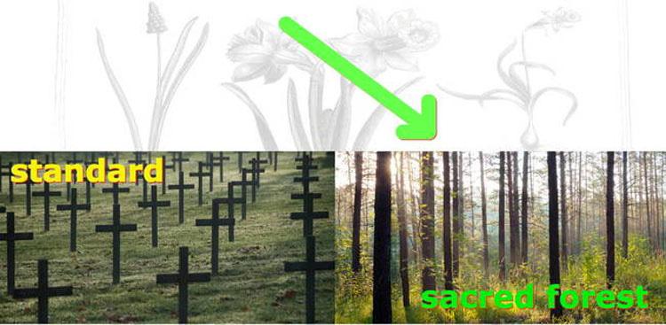 Estas Cápsulas De Entierro Harán Que Te Conviertas En Un Árbol Cuando Mueras