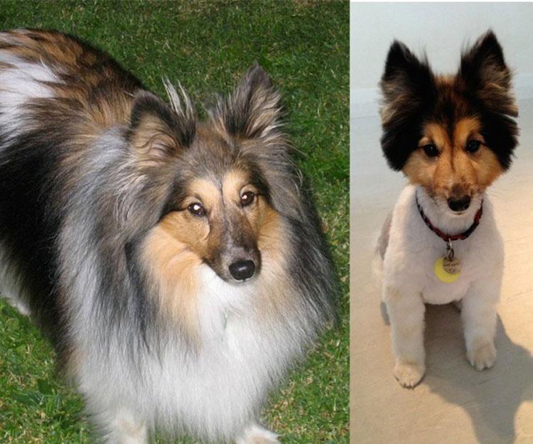 15 Perros antes y después de sus cortes de pelo de primavera. ATENCIÓN al #8