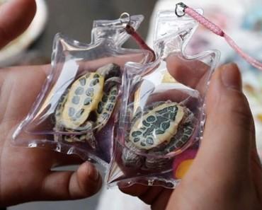 En China, la gente vende CRUELDAD ANIMAL en forma de un accesorio de moda 3