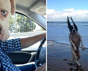21 fotos de perros tomadas en el momento justo. La #7 te alegrará el día