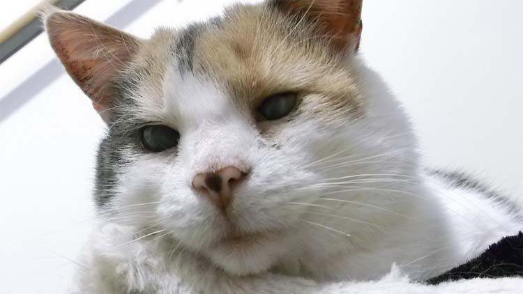 Un gato ciego que nadie quería cambió la vida de este hombre