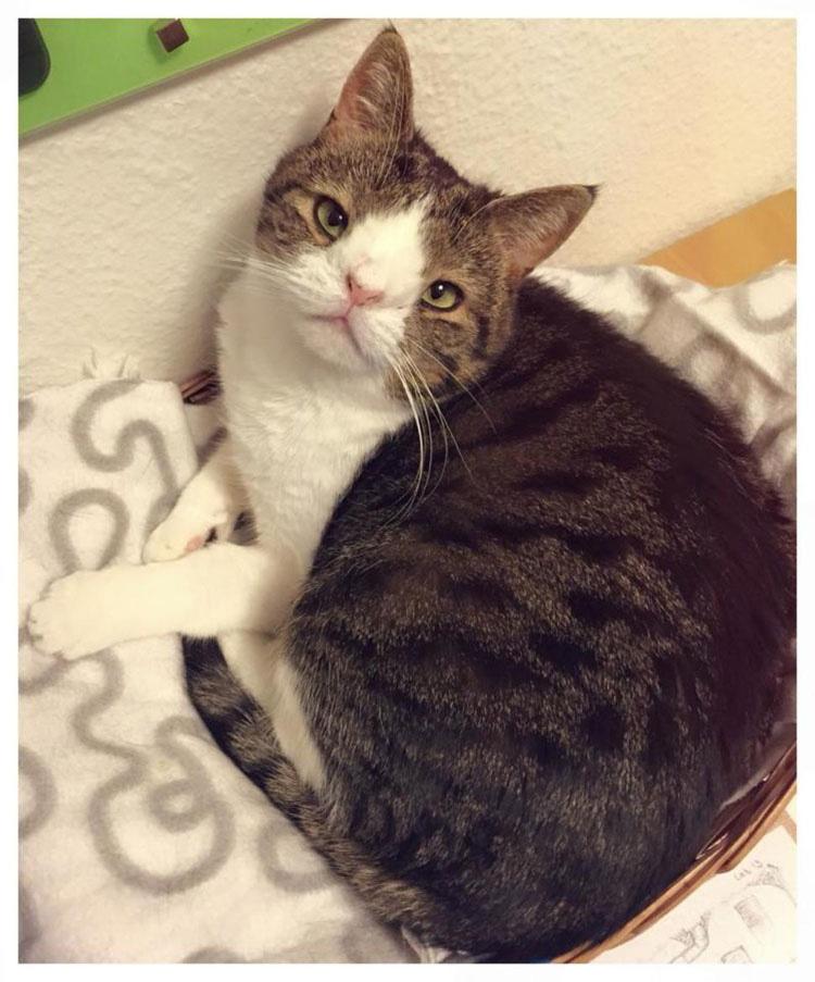 No se parece a otros gatos pero te enamorarás de Monty en cuanto lo conozcas