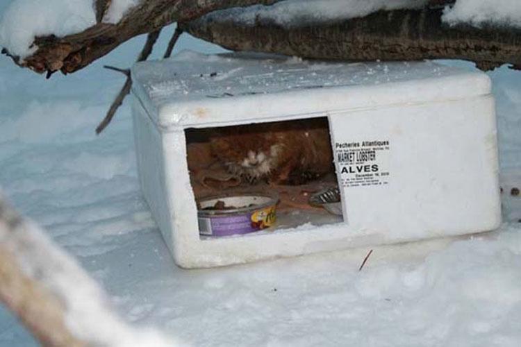 Este hombre encontró una caja en la nieve. No se imaginaba lo que encontró dentro