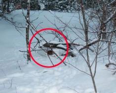 gatos-caja-nieve-destacada