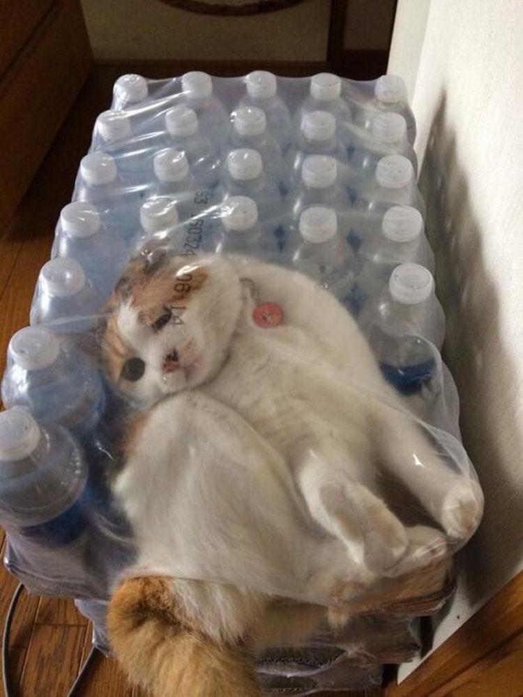 23 Gatos Que Han Fracasado De Forma Estrepitosa. No Te Pierdas El #8