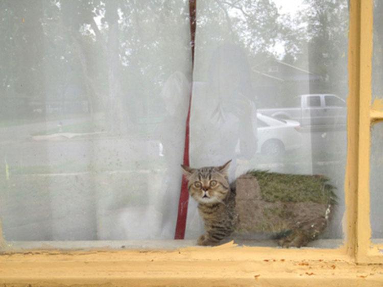 21 razones por las que todo el mundo necesita un gato de Munchkin en su vida