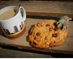 gatos-robando-comida-3