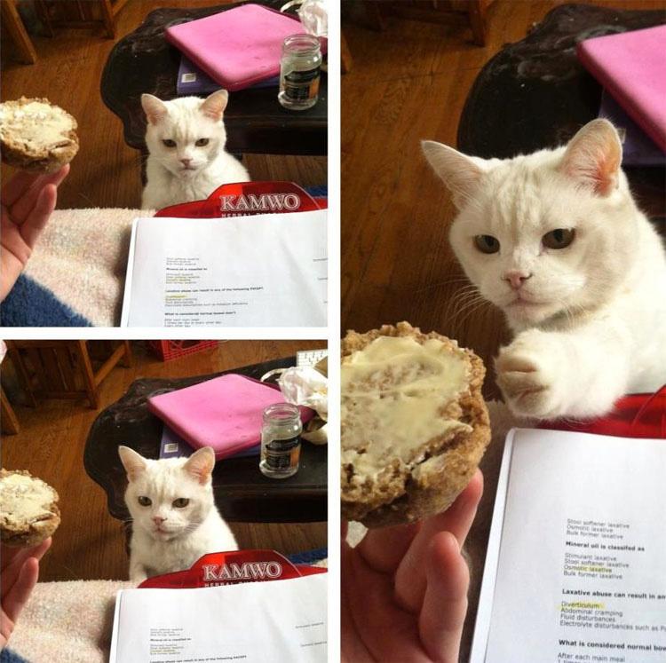 14 gatos que están robando su comida. Atentos al #3