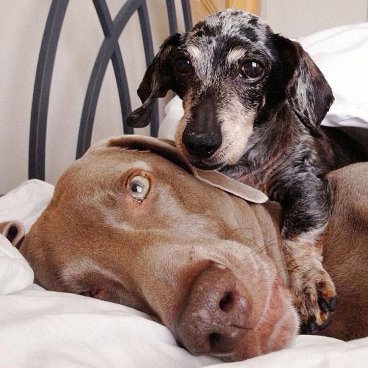 Estos Tres Amigos Se Han Ganado A Internet. Cuando Veas Sus Adoroables Fotos, Sabrá Por Qué