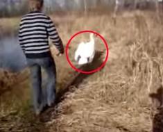 Comenzó a seguir a este cisne que se lamentaba. ¡Lo que encontró te SORPRENDERÁ!