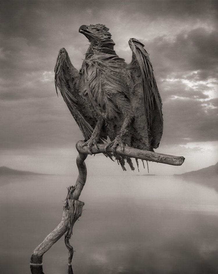 El Increíble Lago De Tanzania Que Convierte A Los Animales En Estatuas