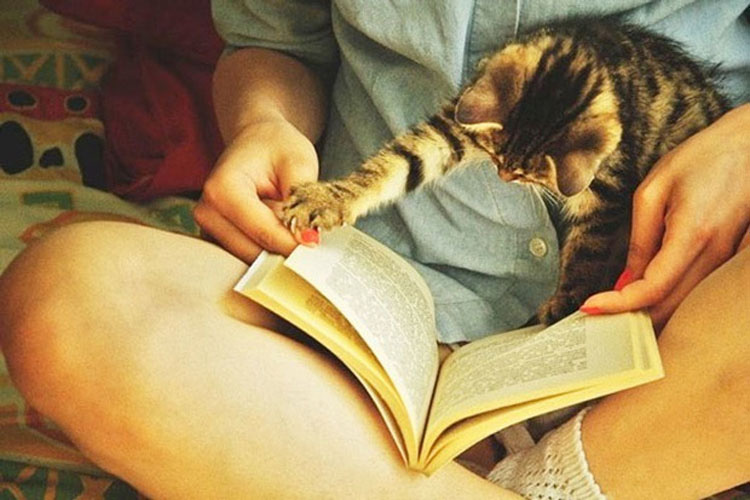 21 fotos que demuestran que los gatos NO QUIEREN que leas. La #10 te hará reír
