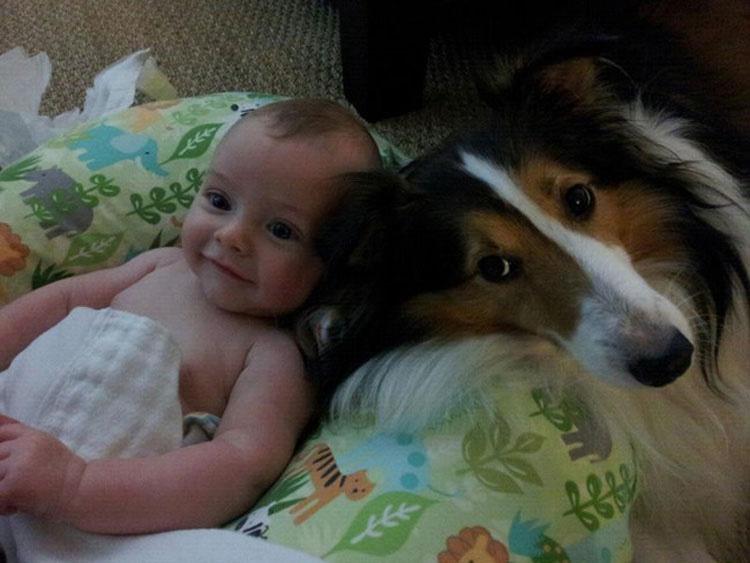 Comenzarás A Reír Cuando Veas Como Estas Mascotas Muestran Sus Celos