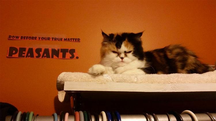 12 mascotas que admiten que son Divas. No te pierdas la #11