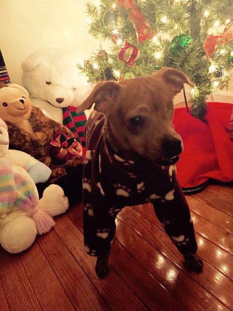 20 perros adorables en pijama. Hay que ver el #8