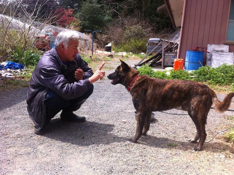 Este hombre se quedó en Fukushima para alimentar a los animales que todos los demás dejaron
