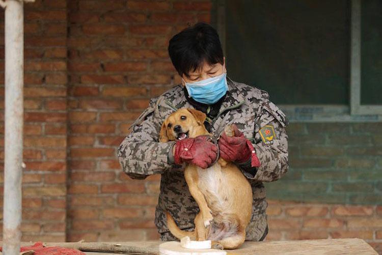 Lo Que Esta Mujer Hace Por 1300 Perros Tiene Que Ser Visto Para Ser Creído