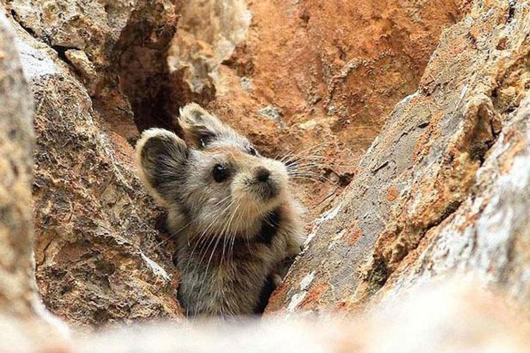 Este extraño y adorable animal ha sido visto por primera vez en 20 años
