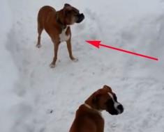 Este perro juega con un pequeño cachorro y le hace ESTO, ¡No pararás de reír!