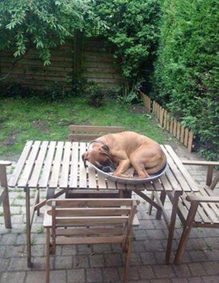 16 perros que no pueden estar cómodos con esa postura. Atención al #6
