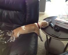 perros-comodos-7