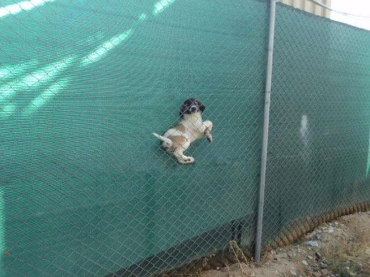 29 perros que acaban de hacer malas elecciones. El #5 es increíble