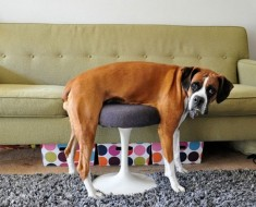 perros-fails-9