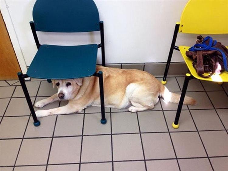 15 Perros en el momento en que se dan cuenta de que van al veterinario en lugar de al parque