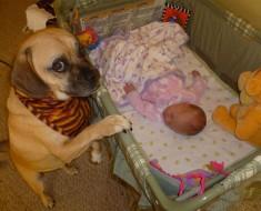 perros-y-bebes-11