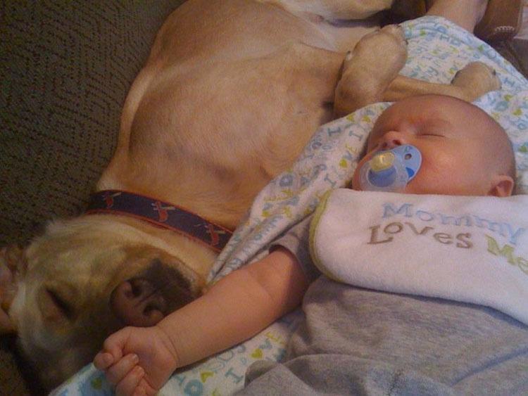 29 Perros Enamorados Del Nuevo Bebé. ¡Especialmente El #21!