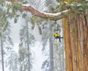 Este árbol de 3.200 años es tan grande que nunca había sido fotografiado en una sola imagen. HASTA AHORA 3