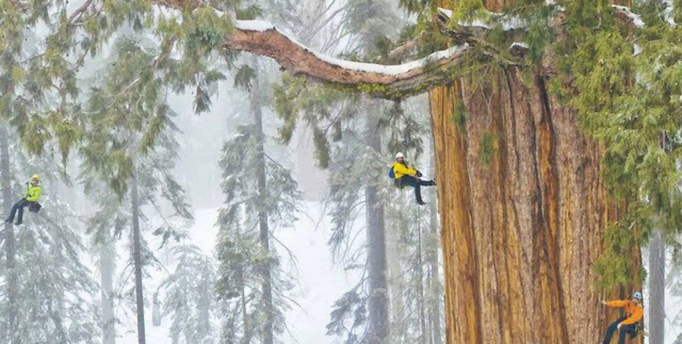 Este árbol de 3.200 años es tan grande que nunca había sido fotografiado en una sola imagen. HASTA AHORA
