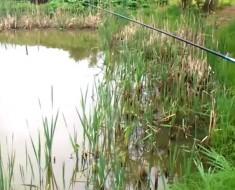 Este pescador se lleva la sorpresa de su vida cuando intenta recoger su captura