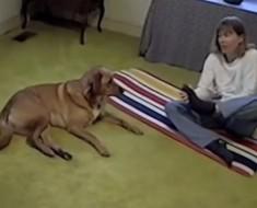 Esta señora intenta hacer una postura de yoga complicada frente a su perro. La respuesta del perro es hilarante