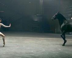 La bailarina baila de forma asombrosa, pero MIRA lo que hace el caballo